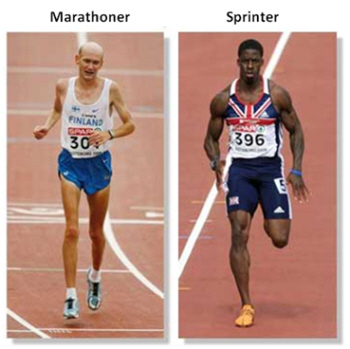 I think this sums up why you should sprint! Image found here.