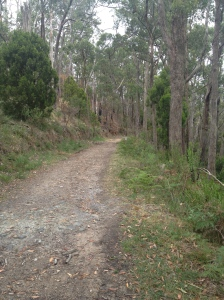 Peaceful bushwalking rather than 'hiking'.